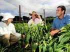 Farmers trial carbon capture
