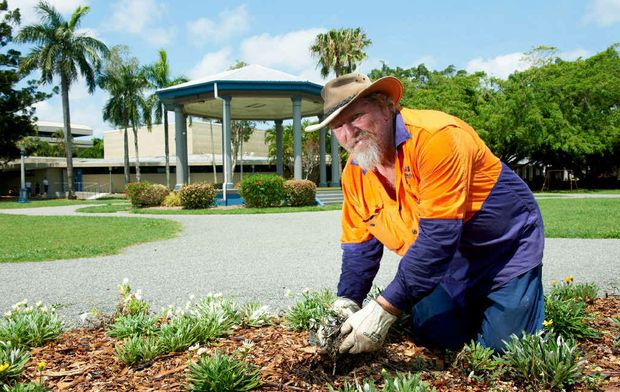 Mackay Regional Council's Tony Bennett works on the garden beds at Jubilee Park.