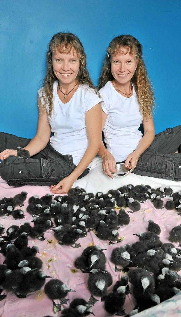 Bridgette and Paula Powers with more than 300 Noddy Terns rescued from Lady Elliot Island.