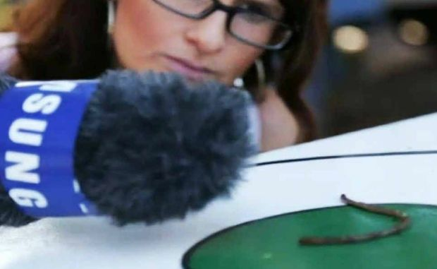 Toowoomba blogger Christie McCabe's video about the Crows Nest worm races has earned her a trip to the London Olympics.