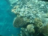 A GROWING human population and a changing global environment expose the fragility of coral reef ecosystems.