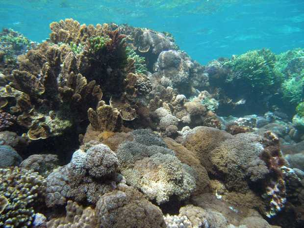 A coral reef community in the Lord Howe Island Marine Park.