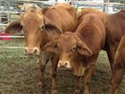 Canadian case of mad cow disease serves as reminder