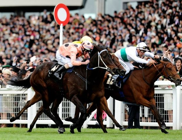 Jockey Luke Nolen and Black Caviar in action at Royal Ascot.
