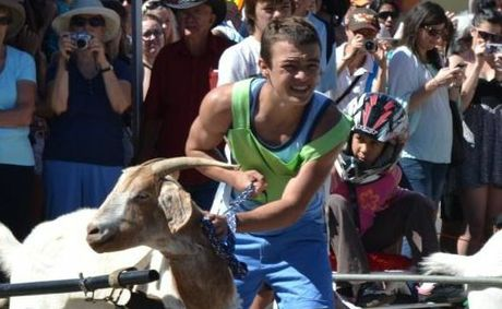 There will be no goat racing this year in Roma as Animal Lib put the squeeze on sponsors.