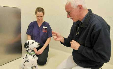 Better Pet Vets veterinarian Holly Goldring with visiting veterinarian behaviourist Cam Day demonstrate a technique with dalmatian Mintie to reward good behaviour.
