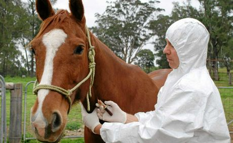 A veterinarian collecting a blood sample from a horse for lab testing during the 2007 equine influenza outbreak in Australia.