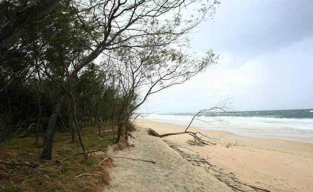 Vandals attack natural vegetation at Kingscliff Beach.