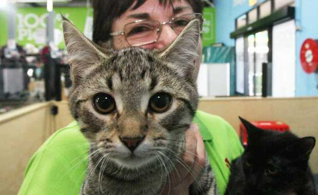 Friends of the Pound, the RSPCA and Tweed Shire Council are offering subsidised cat desexing for low income pet owners.