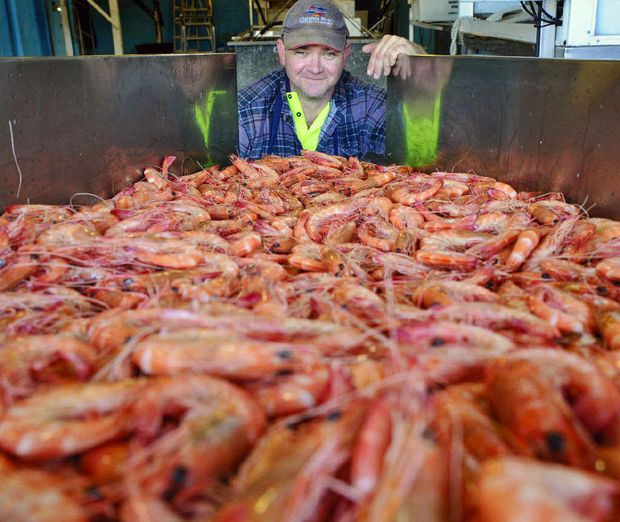 Corey Felsh, second-in-charge on the Clarence River Fisherman's Co-op west fish floor with a sample of the king prawns that will be destined for Gate to Plate.