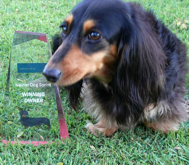 Fleet-footed filly Tess (and her owner Peta Sutton) took out the Weiner Dog Sprint trophy at Middlemount Race Day.