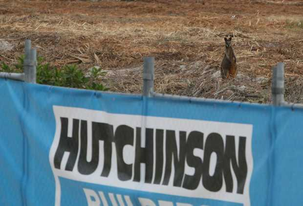 A Hutchinson building site at Casuarina where Wallabies and other wildlife are seemingly trapped.