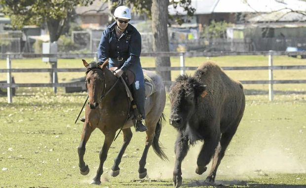 Necia Creighton of South Grafton tackles a bison at Hawthorn Park.
