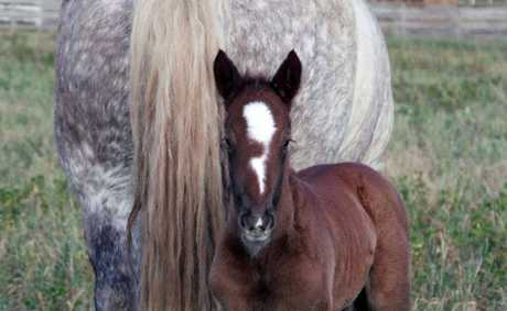 Dam Shirley welcomes her foal into the world.