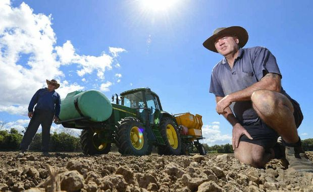 Ross Farlow (front) and Bruce Ellem planting cane on Alan Cameron's farm. They would now like some follow-up rain.