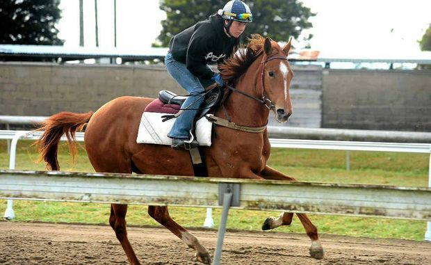 Regular partner, Keira Calland, sends the imposing Jet Spur filly along at trackwork at Murwillumbah on Thursday morning.