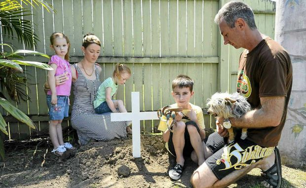 Westlawn family Jodie and Chris Pugh and children Makayla, 5, Savannah, 3, and Noah, 7, mourn the loss of their husky dog Anouk, who was bitten by a brown snake in their backyard on Wednesday.