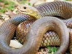Snake season warning for pet owners
