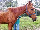 Abandoned horses left to starve at Nimbin property