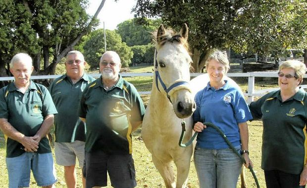 NEW ADDITION: Members of the Korea South East Asia Vietnam Veterans Association have donated funds to help the Ballina and District Riding for the Disabled to buy this new horse, Elvis. Pictured is Don Oakley, Kevin Staib, Norm Mulholland (president), RDA secretary and coach Peta Best and Bev Young.