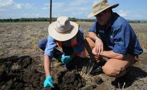 Director of Biosecurity Queensland Control Centre Neil O'Brien keeps a close eye on sample collection from the Forest Hill fire ant infestation.