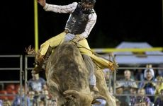 TOUGH RIDE: Troy Wilkinson tries to hang on during the PBR Tour event at Clive Berghofer Stadium.