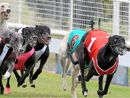 A $5.6 MILLION greyhound track planned for Murwillumbah will not go ahead after the contract between the developer and greyhound racing club fell through.
