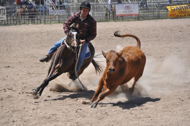 CLOSE CONTACT: Plainland rider Luke Collman and Bogus Bill in the Supafloats Canning Downs Campdraft at the Warwick Rodeo yesterday. Photo Gerard Walsh / Warwick Daily News