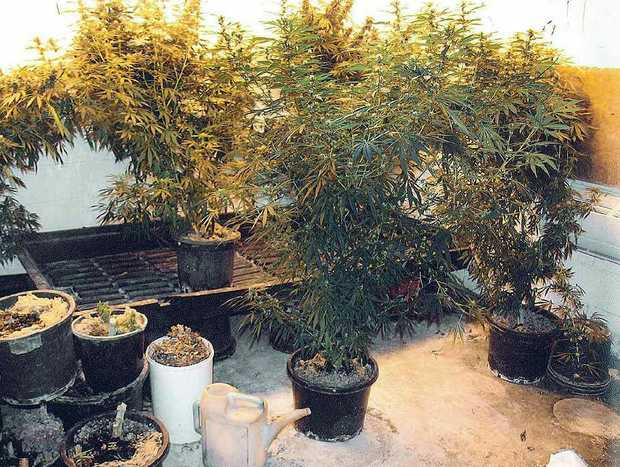LARGE HAUL: Former soldier Kevin Craig, 53, pleaded guilty to producing 12.4kg of cannabis in his home.
