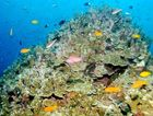 Threat of 'in-danger' reef listing should stay