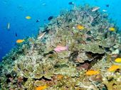 THE Federal Government has launched a $140 million reef trust aimed at improving the Great Barrier Reef's water quality.