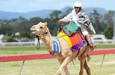 Bruce Viner in action on his camel.