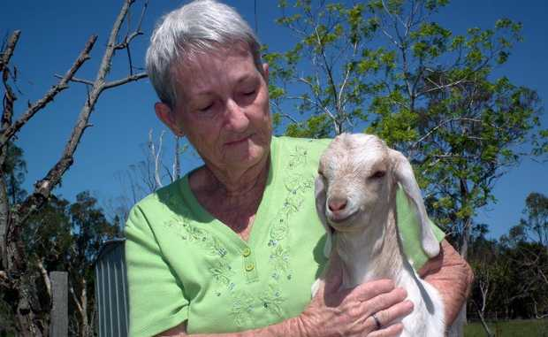 Tina Johnson holds one of the surviving kids after a pack of dogs strayed onto her property, killing a number of goats in Dundowran.