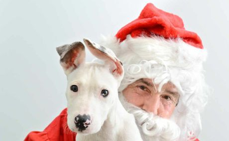 GOOD DOG: Michael Beatty from the RSPCA, dressed as Santa, with Dahlia. Your pet can also meet Santa Paws.