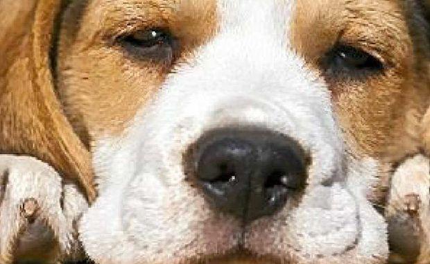 Dogs love Bach