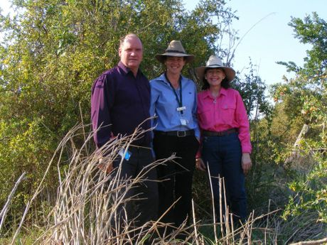 DECLARED WEED: Greg Griffith, natural resource management and parks manager, Denis Whyte, natural resource management officer and South Burnett Regional Councillor Kathy Duff stand in front of an African Boxthorn.