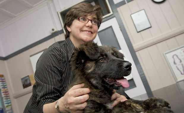 Vet Christine Burke warns dog owners to get their animals vaccinated.
