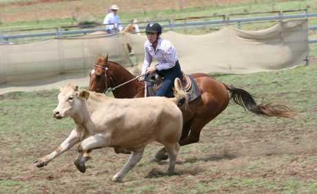 BIG DAY OF RIDING: The Yarraman Campdraft attracted 267 first round runs on Saturday.