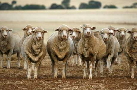 Sheep producers should be on the alert for flystrike in warmer, wetter months.