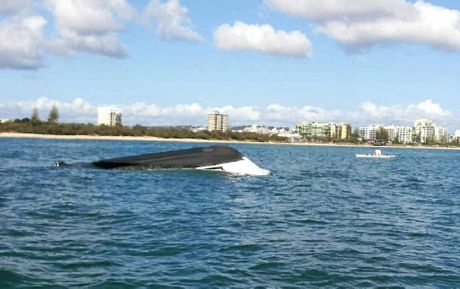 The stricken boat floats upside-down yesterday morning after it was towed back to Mooloolaba.