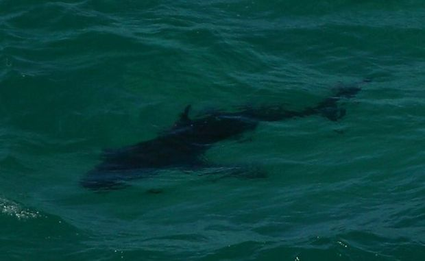 A MAN was nipped on the leg by what was believed to be a small shark off Mooloolaba today.