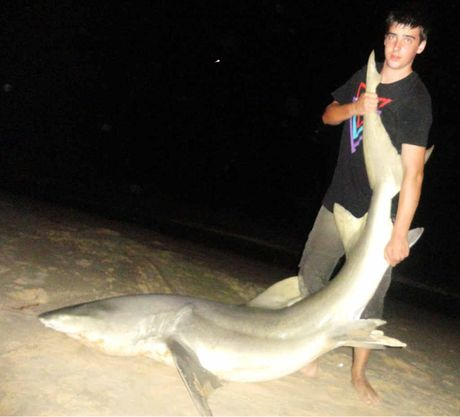 Ipswich school leaver Brock Walter with the shark he caught and released at Inskip Point.