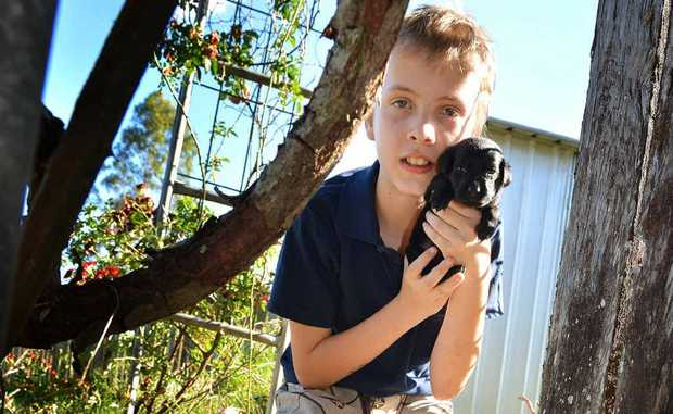 Daniel Flight, 12, was relieved firefighters were able to rescue his labrador puppy from inside a stormwater drain on Monday evening.