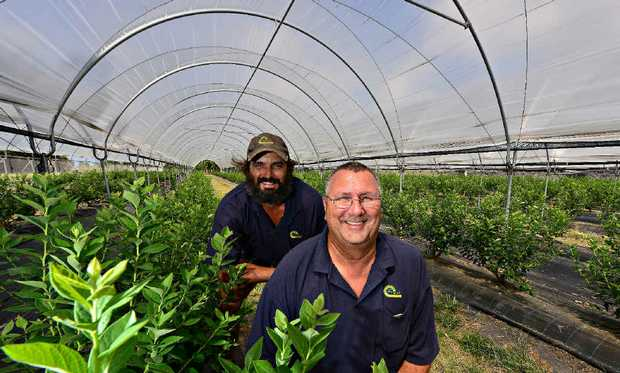 SIMPLY BLUE: Perfection Fresh farm manager Jamie Philips and Queensland value-add manager Allan Mahoney have had great success with blueberries.