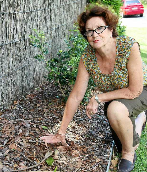 GONE: Georgi Sullivan shows the spot from where the plants were stolen.