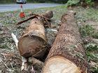 Man killed by falling tree near Rolleston