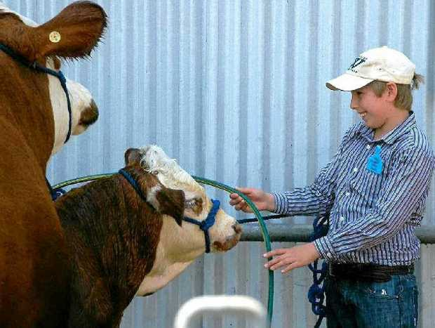 CATTLE FUN: Joshua Deveth cleans his Simmental beast in the wash bay at last year's Simmental Junior National Camp. The camp will once again be held January 11 – 13 at the Pittsworth Showgrounds.