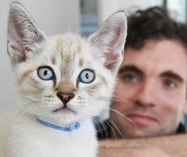 PROBLEM SNIPPED: Vet Dr James Kennedy examines one of the kittens at the facility.