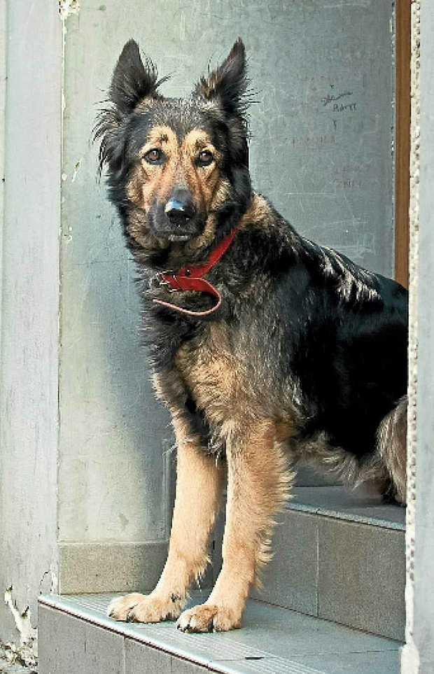 Dogs are kept both as pet companions in drug lab locations and for security purposes.