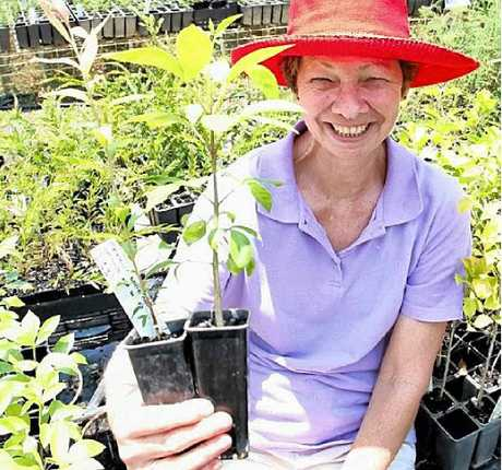 Gympie and District Landcare treasurer and volunteer Carol Graham encourages ratepayers to collect their free trees before 2012 vouchers expire.
